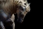 Horse biggrey