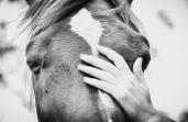 Horsehandgirl
