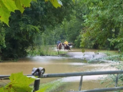 flood horses 22