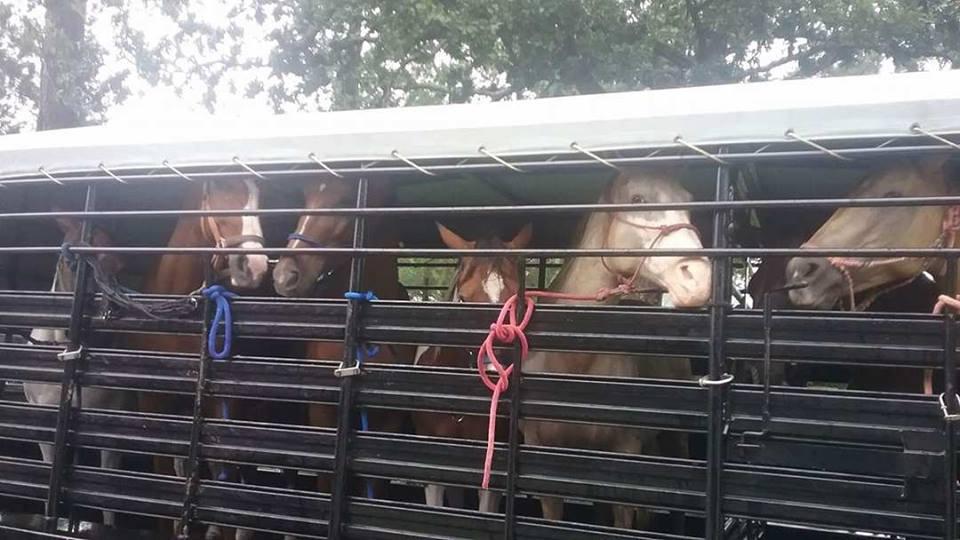 Flood horses 3