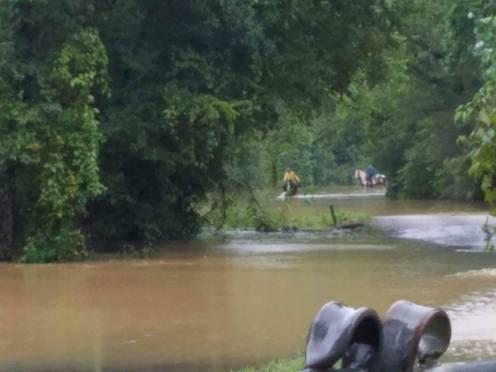 flood horses1