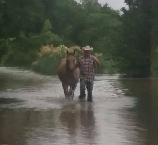 flood horses2