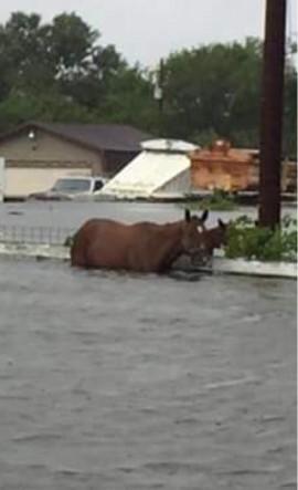 floodhorseCHINA