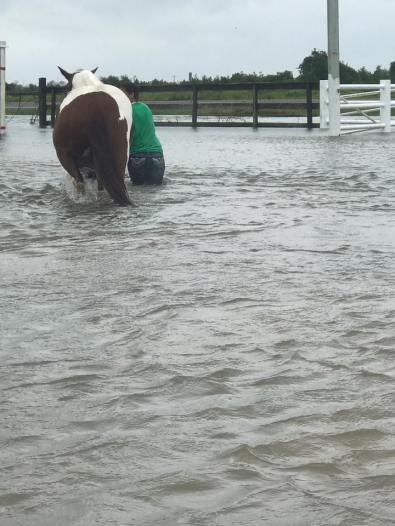 floodhorsejack
