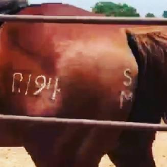 R194 butt