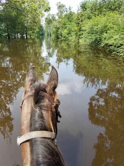 Flood Allen Sunday4