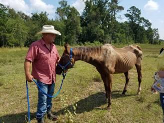 Flood Horses Allen jess4