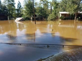 Flood Wed Waters