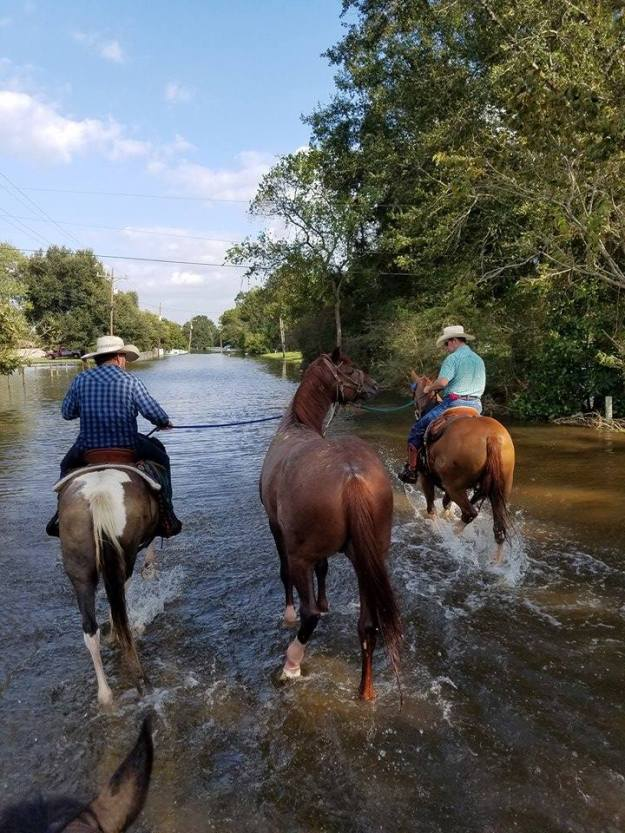 floodhorsespainttttt