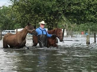 FloodPA horses
