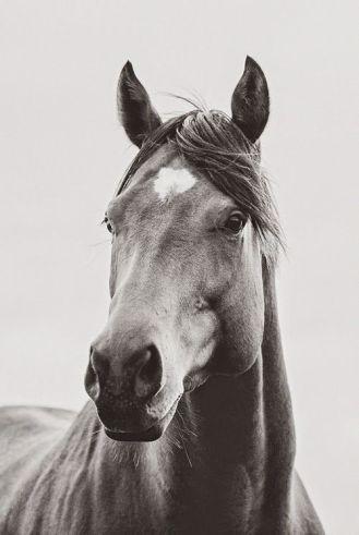 sh horse face